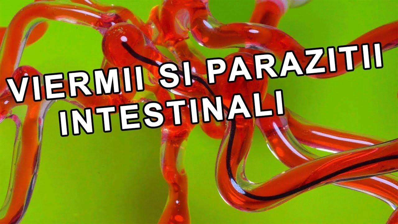 Paraziti intestinali la animale