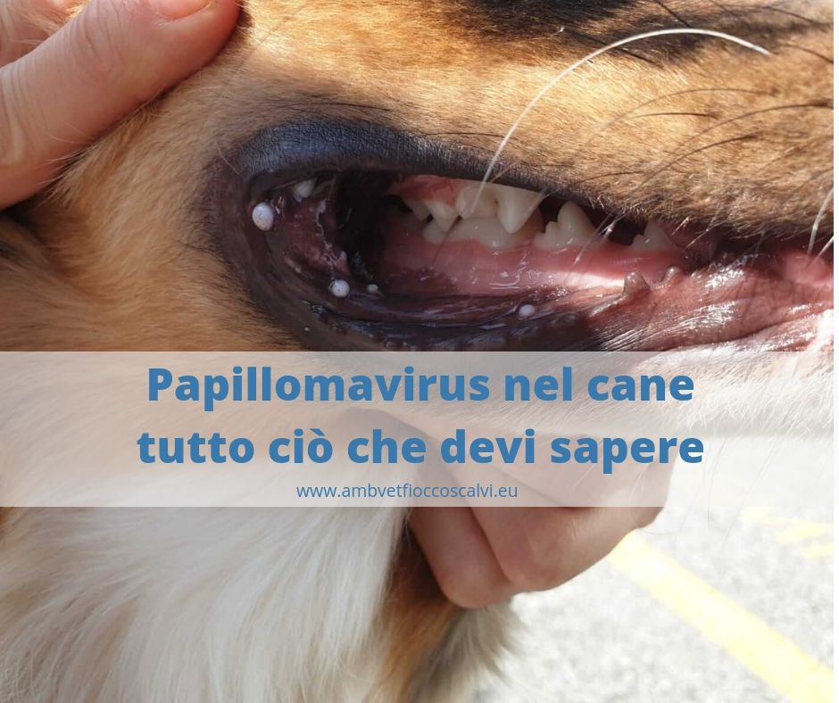 Papilloma nel cane. Aggressive cancer weeks to live