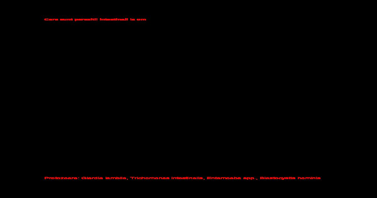 protozoare giardia la om)