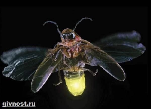 cum arată larvele de raze?