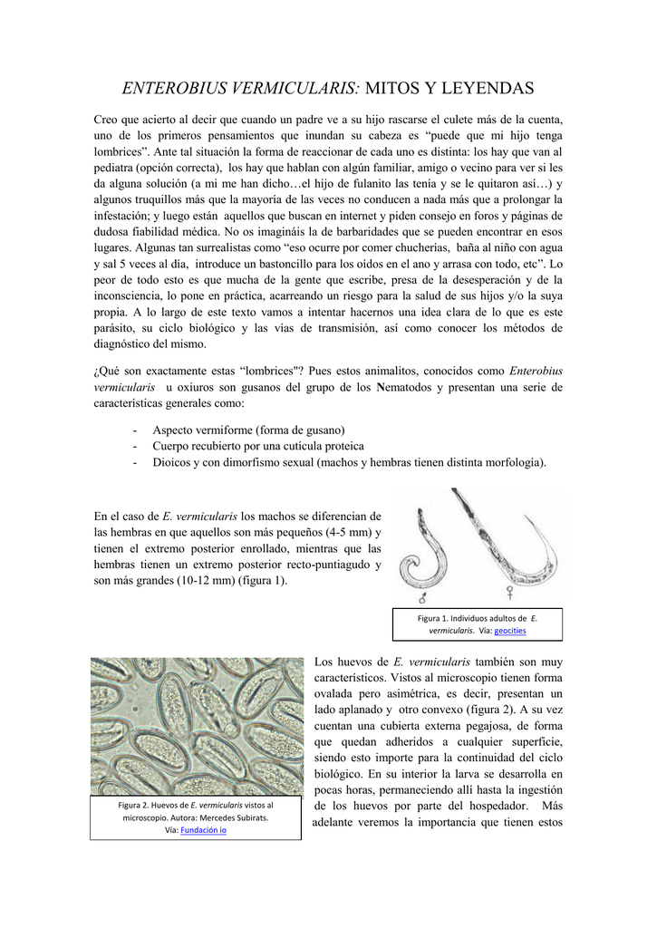 enterobius vermicularis reproduccion