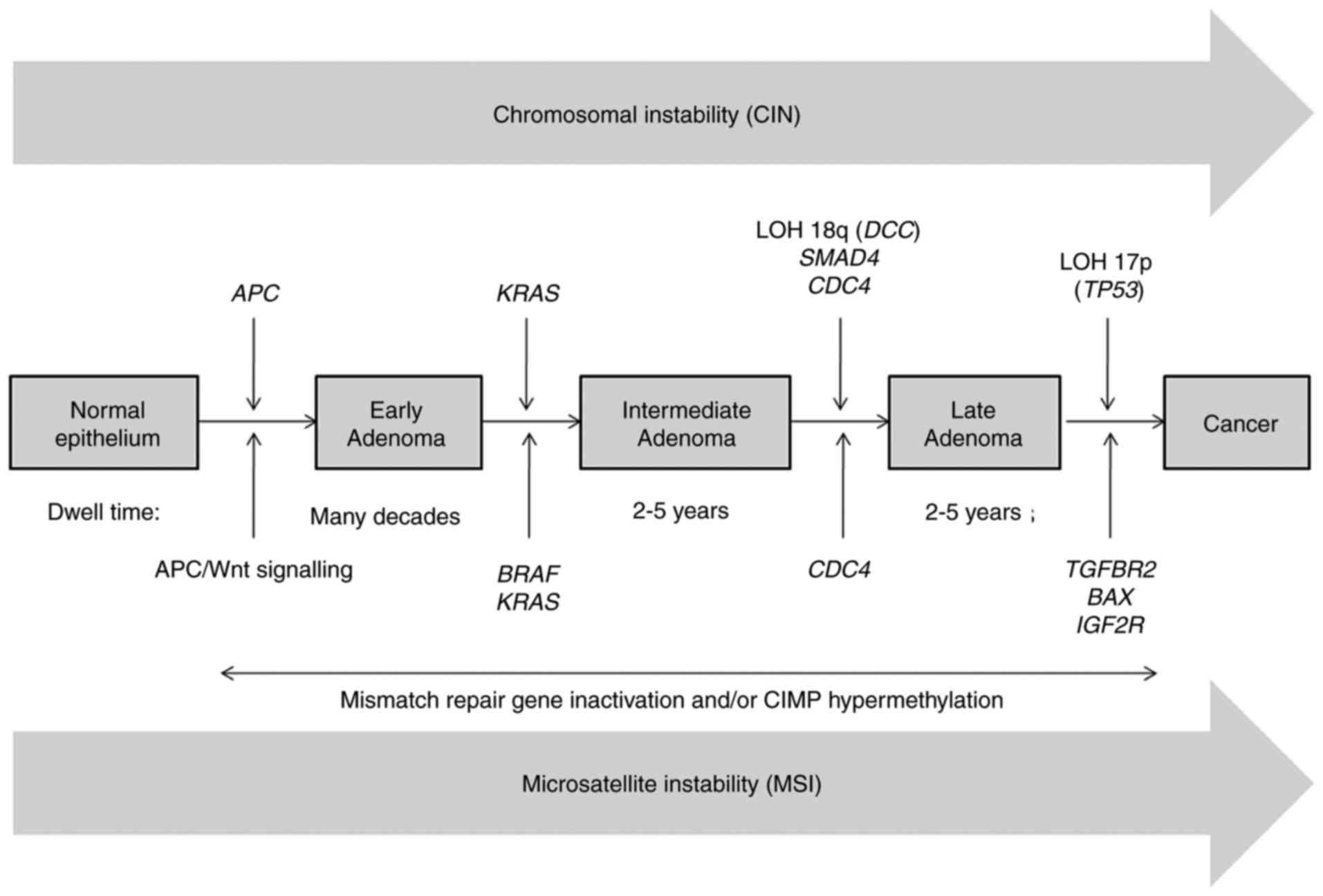 colorectal cancer pathogenesis