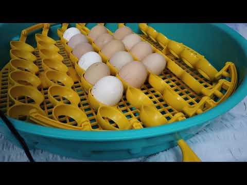 câte fecale în viermele ouălor