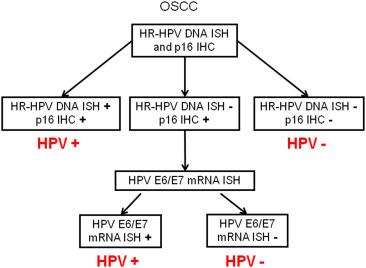 human papillomavirus e6 e7 mrna)