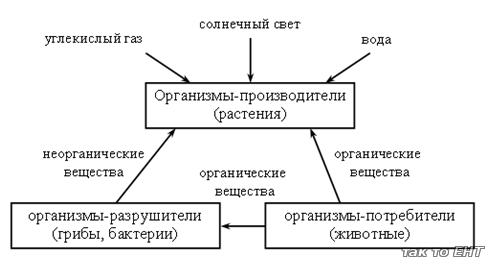 diagrama ciclului de viață pentru tenă
