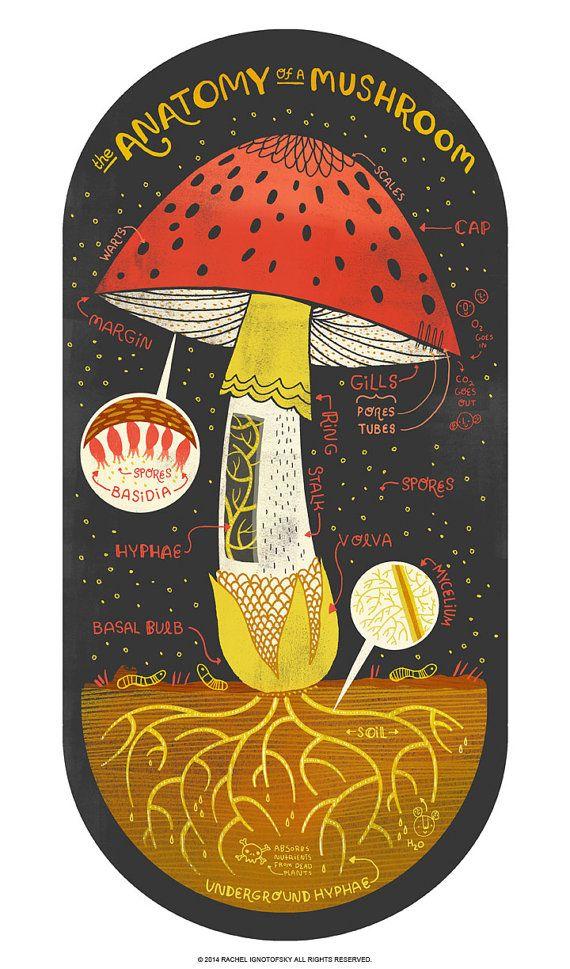 ciuperci jumbo)