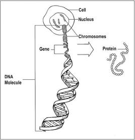 cancer causing genetic mutations)
