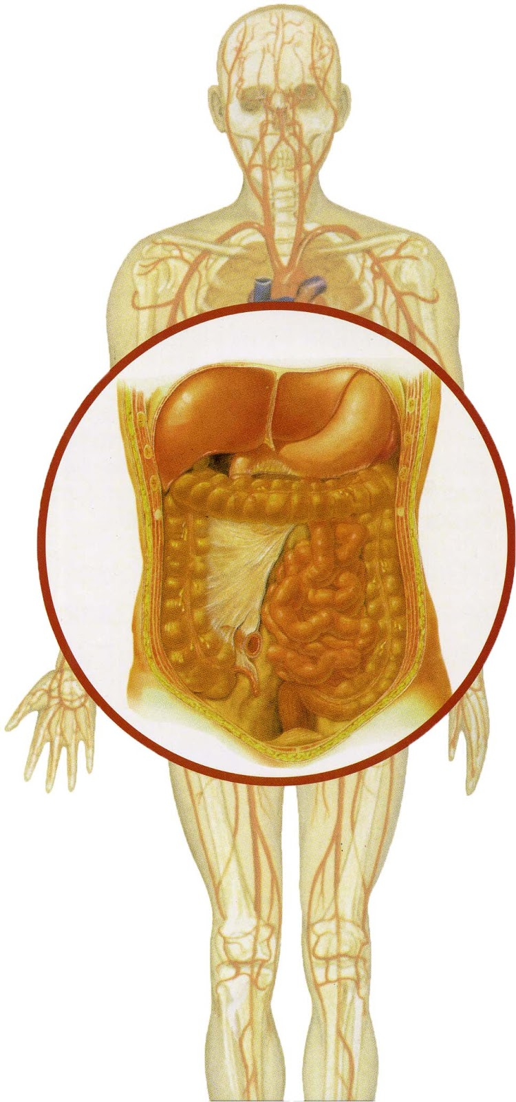expulza detoxifierea colonului)