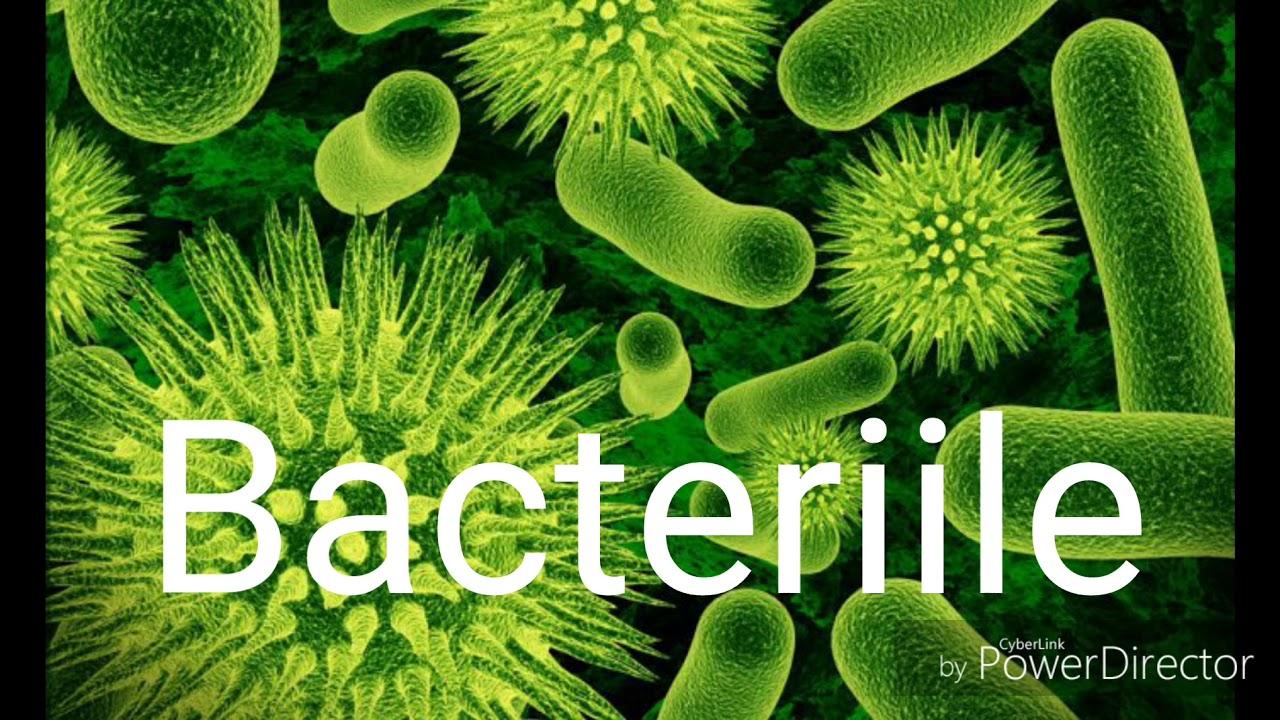bacterii dex papillomavirus behandlung man