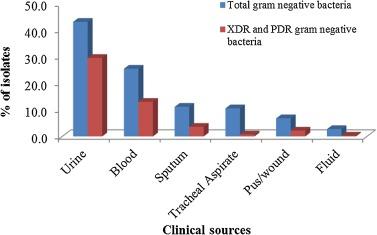 xdr bacteria