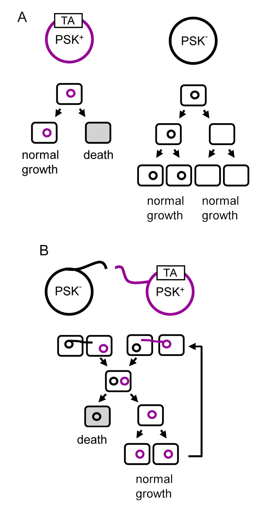 Gene toxin b Cancer de colon ultima faza