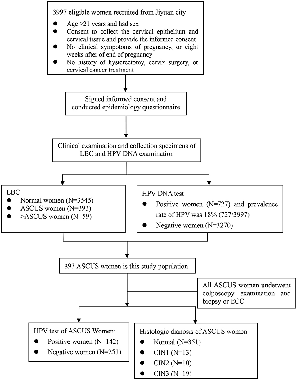 hpv high risk of ascus thinprep