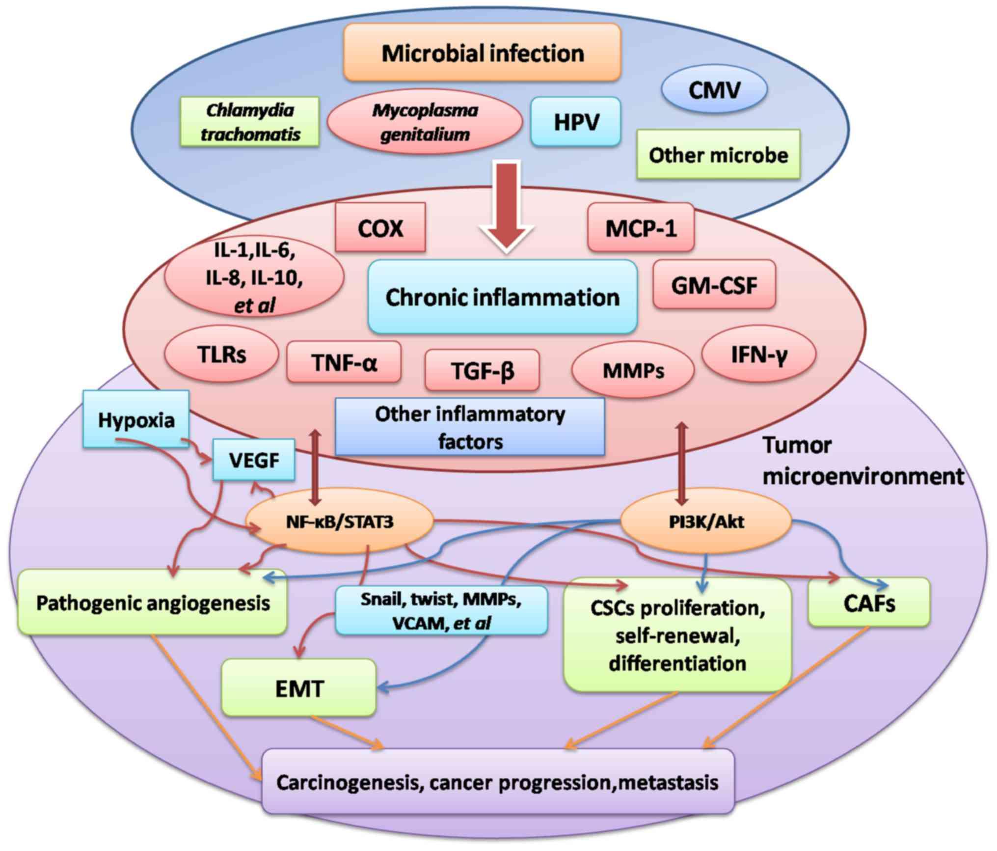 hpv ovarian cancer)