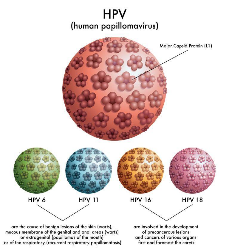 Hpv virus treatment in ayurveda