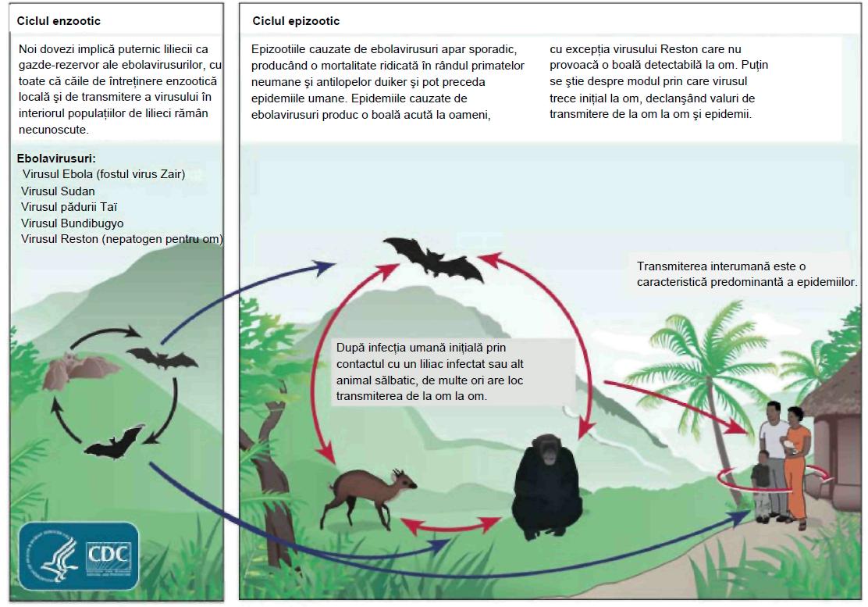 cum să scapi de virusul papilomului medicamente pentru viermi rotunzi și alți paraziți