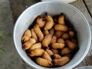 infestarea cu viermi de către paraziți)