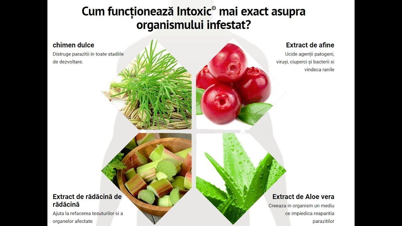 nutriție atunci când curățați corpul de paraziți)