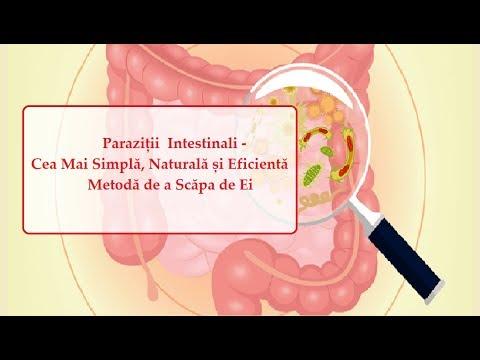 papilloma virus cauze tratament intestinal pentru bacterii și paraziți