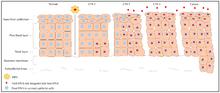 Papillomavirus traitement antiviral. Papillomavirus humains guerison