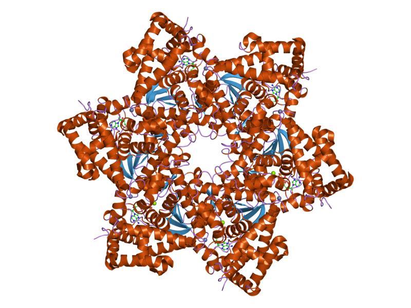 papillomavirus manusia)