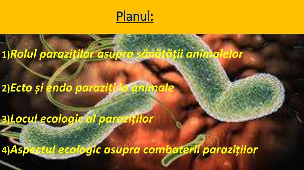 Smecta în tratamentul viermilor transmis prin condilom cunnilingus