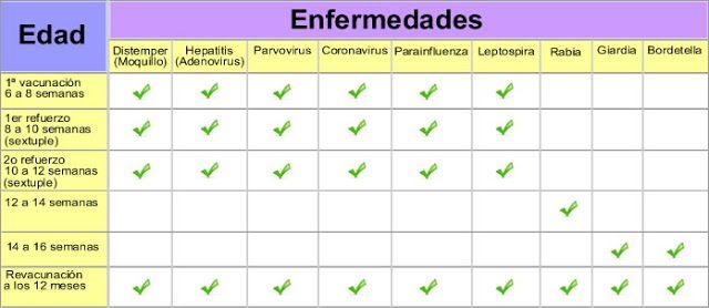 giardioza hofitolului, Giardia caini simptome